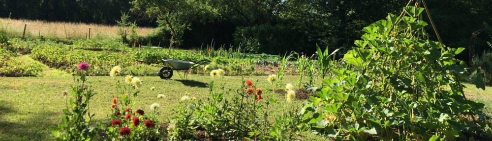 Un jardin dans le Marais poitevin