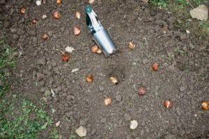 Tulipes : un jeu d'enfant avec le plantoir à bulbes dans la terre fraichement ameublie.