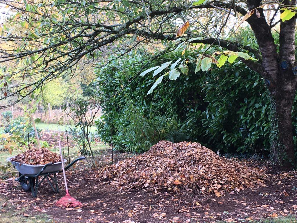Le tas de terreau de feuilles de l'automne dernier a fait place nette : le grand ramassage peut commencer !