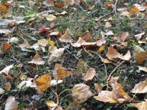 La tondeuse facilite la collecte et broie les feuilles pour un meilleur compostage.