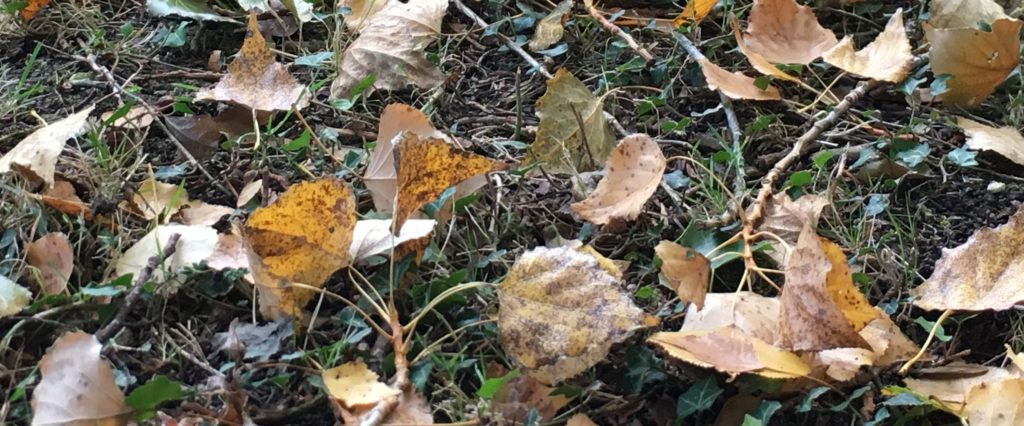 Compost de feuilles / Un jardin dans le marais poitevin.