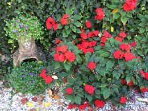 Campanules des murailles et Impatiens / Un jardin dans le Marais poitevin.