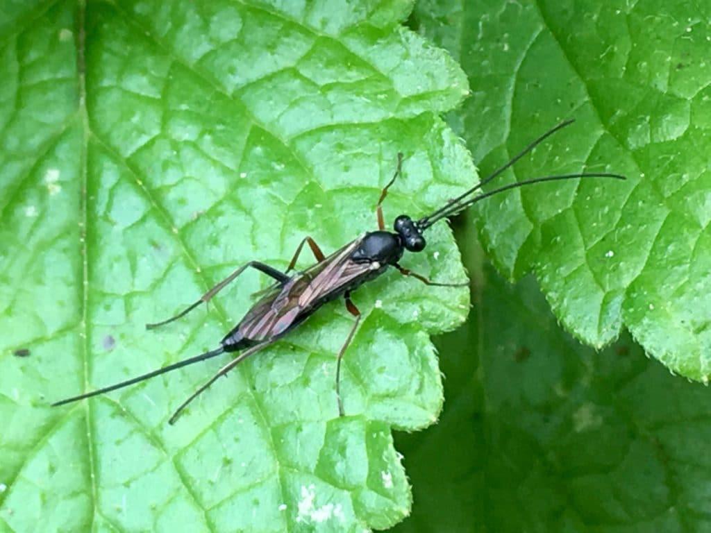 La Rhysse : une longue tarière pour perforer les bois contaminés et atteindre les larves xylophages / Un jardin dans le Marais poitevin.