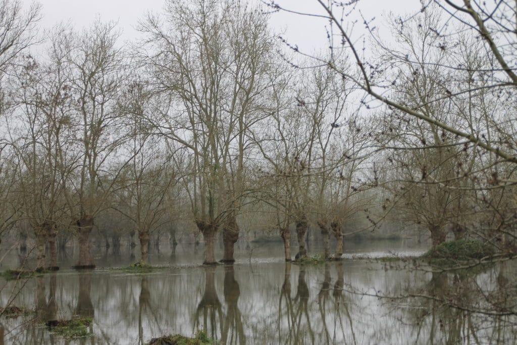 Inondation hivernale / Un jardin dans le Marais poitevin.