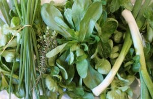 Pour accompagner l'omelette à l'ail vert, une salade de mâche / un jardin dans le Marais poitevin.